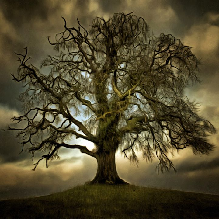 One Tree Hill - Brymac PhotoArt