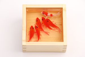 3D goldfish painting