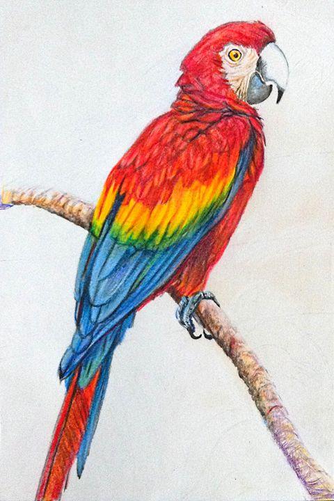 Parrot sketch - marina's art