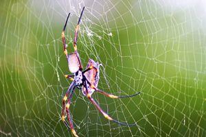 Spider dinner time