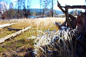 Morning Frost Yellowstone