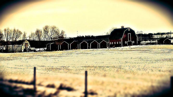 Barn and Grain sheds 3 - Nicholson Art Gallery