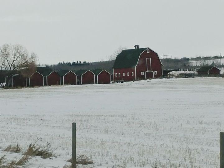 Barn and Grain sheds - Nicholson Art Gallery