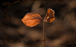 Sunlit Golden Leaf