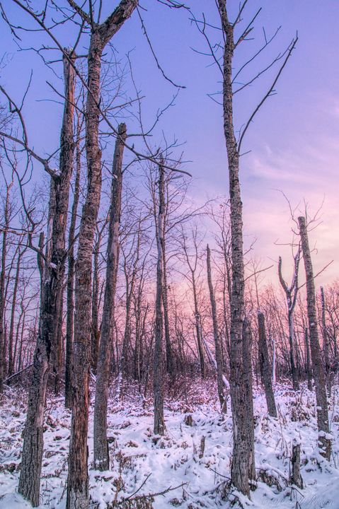 Sunset Winter Trees - Images Undefined