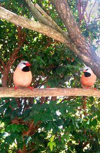 Finch Friends