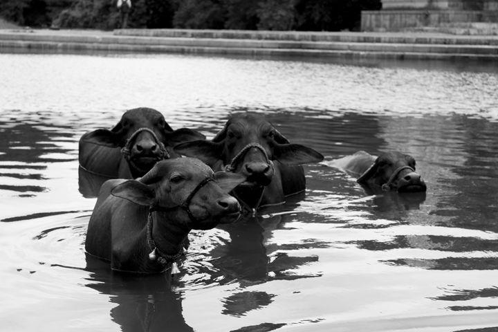 take a bath - Tripunj