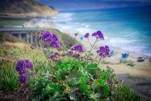 Coastline Color