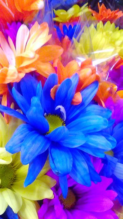 RainBow of Flowers - SKS