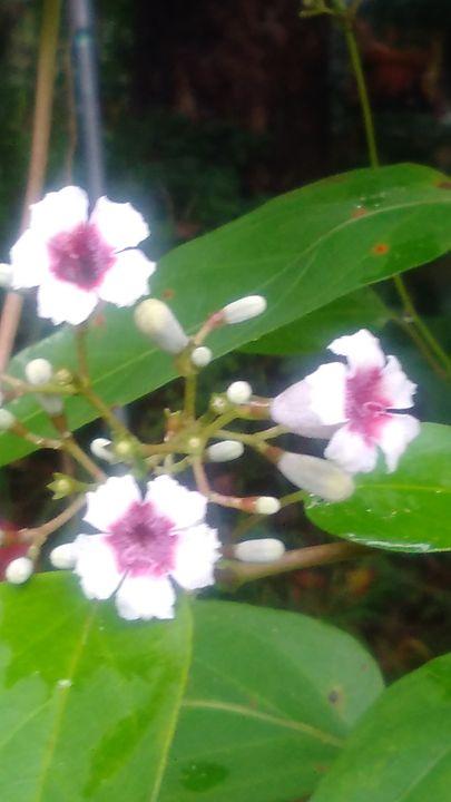 Wild Flowers - SKS