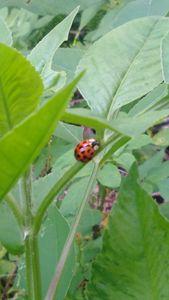 Lady Bug on Grass