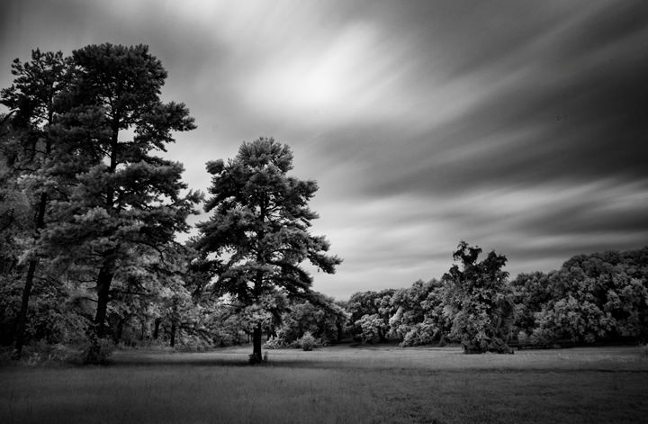 Standing Still - Photography by Michael Riffle