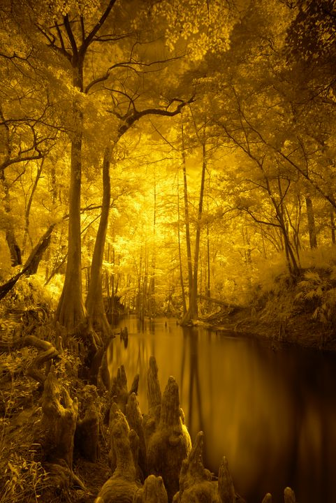 Under the Canopy - Photography by Michael Riffle