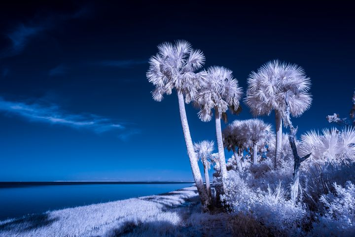 Feeling Blue - Photography by Michael Riffle
