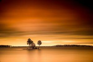Palms Adrift