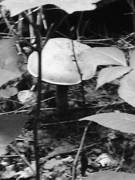 Shroom - North Woods Photography