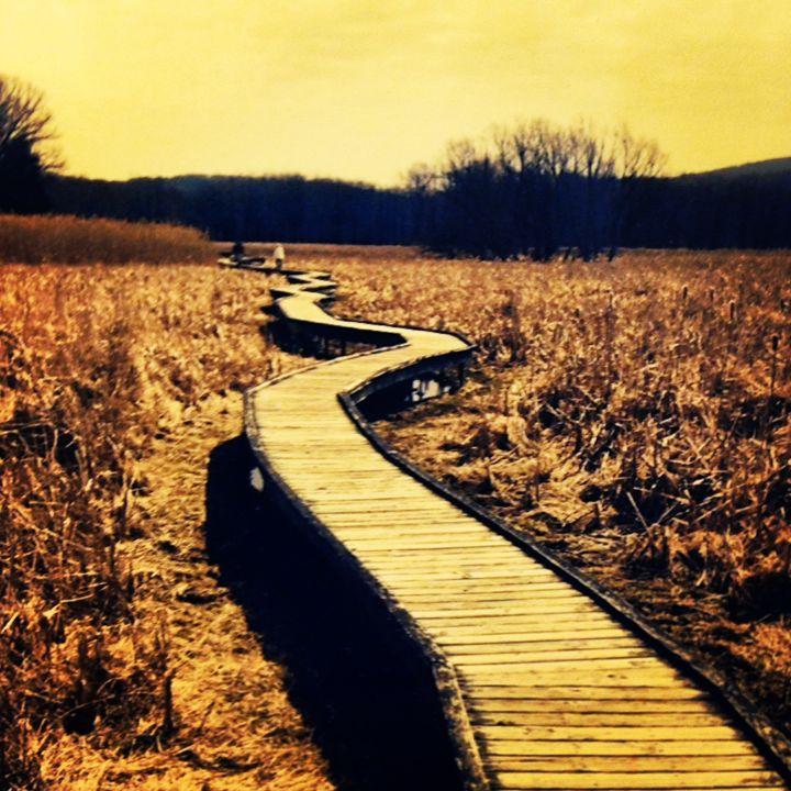 Boardwalk- Appalachian Trail - North Woods Photography