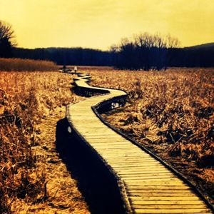 Boardwalk- Appalachian Trail