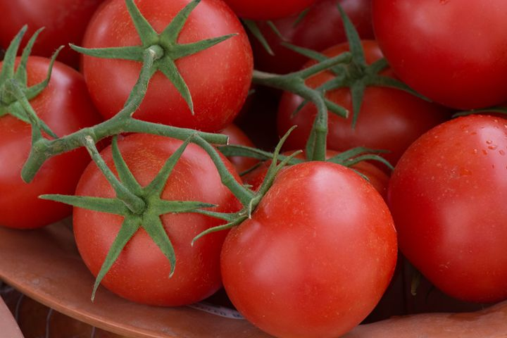 Red Tomatoes - Michael Moriarty Photography