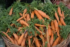 Carrot Harvest - Michael Moriarty Photography