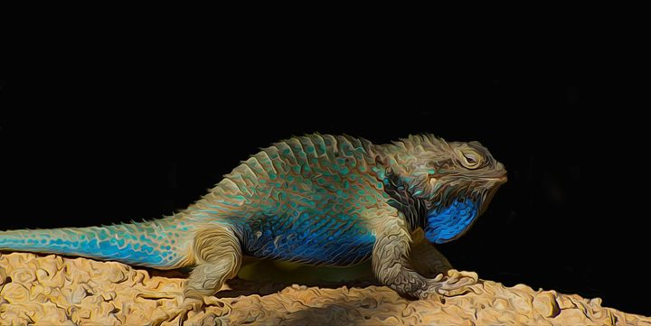 Lizard on Black Background - Michael Moriarty Photography