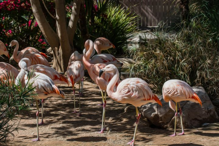 Pink Flamingos - Michael Moriarty Photography