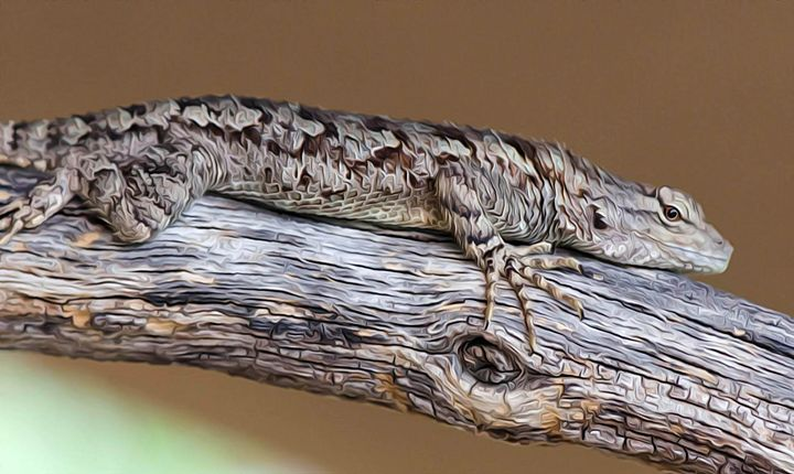 Lizard on Tree Branch - Michael Moriarty Photography