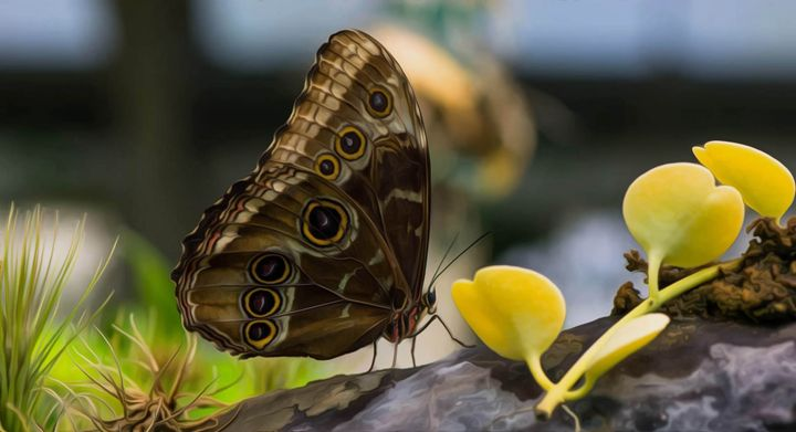 Butterfly in Garden - Michael Moriarty Photography