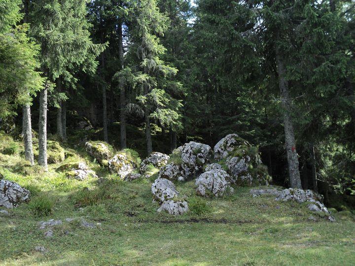 Calcareous stones - rexalanii