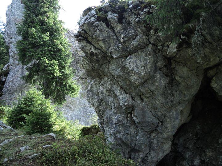 Stone wall - rexalanii