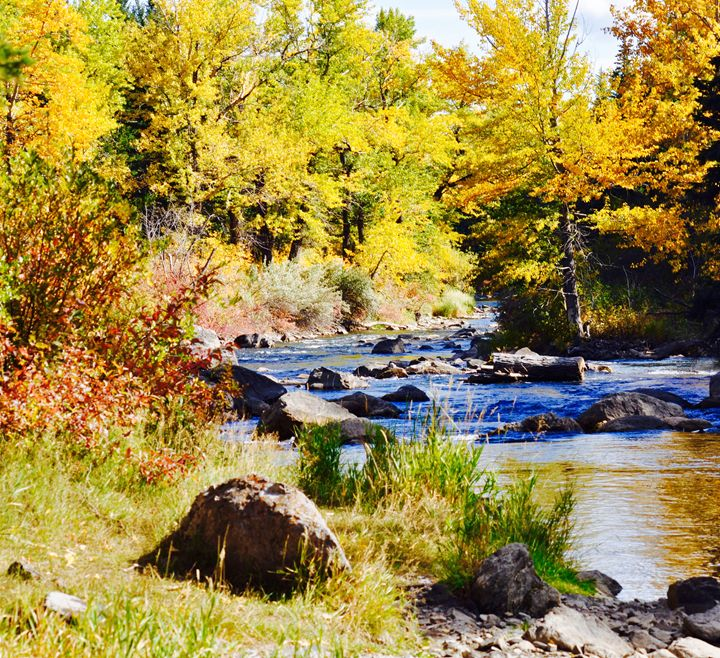 Crowsnest River in Fall - Fledgling Creations