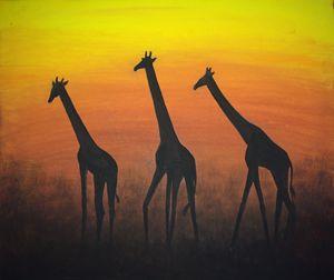 Free Giraffes