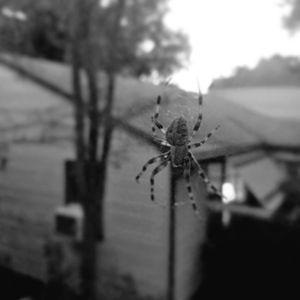 The Itsy Bitsy Spider (B&W)