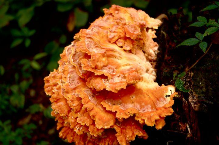 Orange - Edgyfotogeek