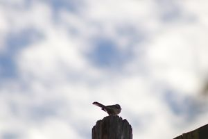 Bird on phone pole