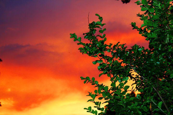 Fire in the sky - Ashley Schwoebel