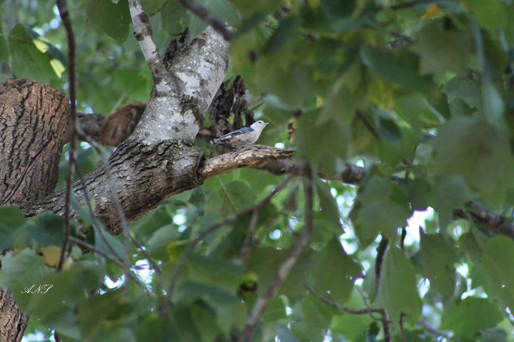 Bird perched - Ashley Schwoebel