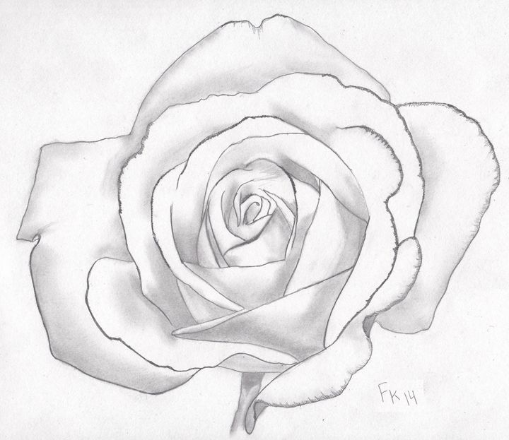 White Rose - FKSketches