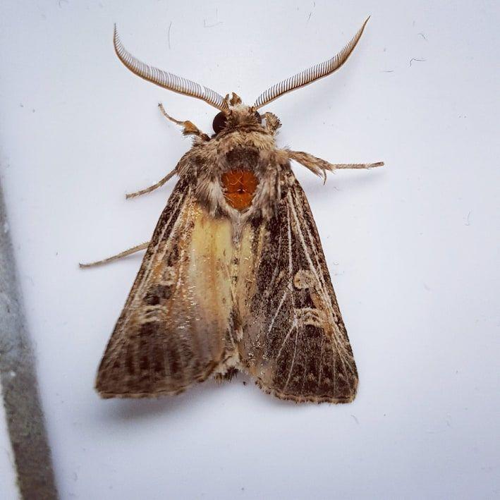 Moth Wings - Metanoia's Art