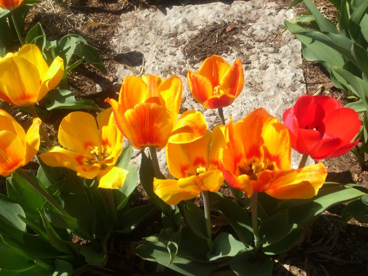 Springtime Flowers - Rachel Maynard