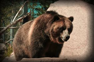 Bear - Tina Abidi Photography