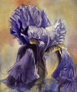 Iris in blues