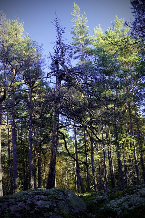 Forest 2 - Mixed Art