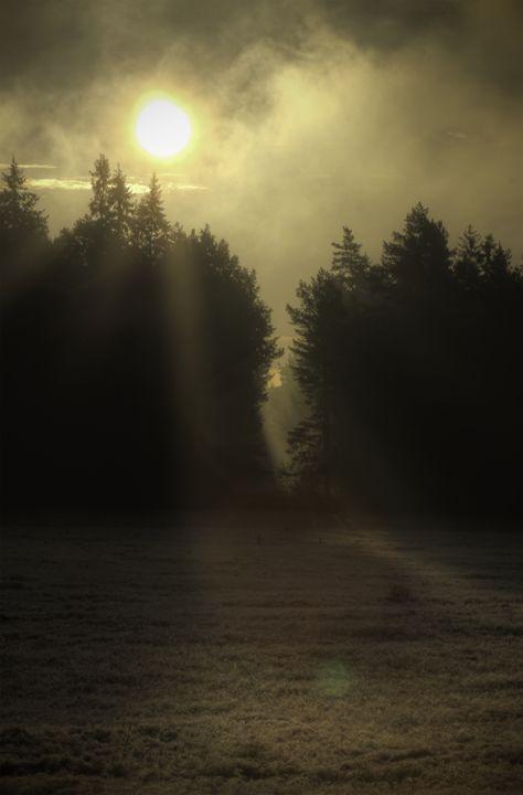 Forest 8 - Mixed Art