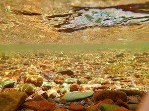 a brook trout view