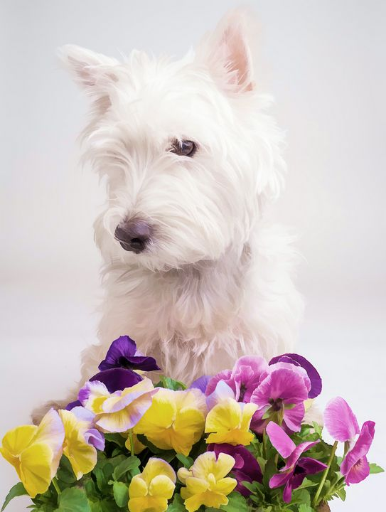 Westie with Spring Flowers - Dogford Studios