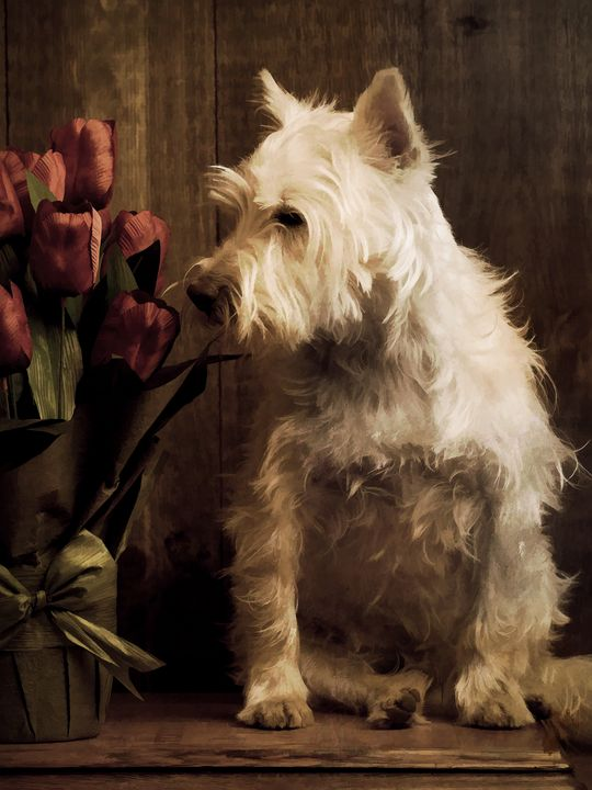 Stop and Smell The Flowers - Dogford Studios