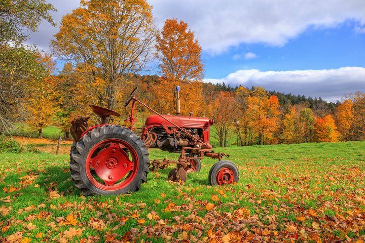 Vintage Tractor Fall Foliage Season - Dogford Studios