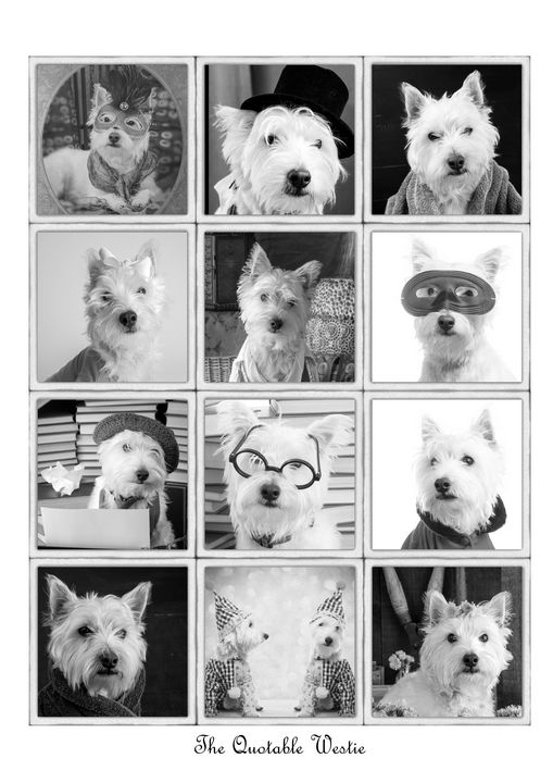 The Quotable Westie Poster - Dogford Studios