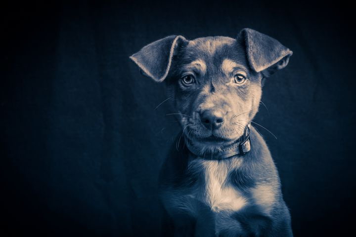 Small Mutt Puppy - Dogford Studios